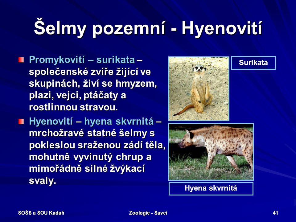 SOŠS a SOU Kadaň Zoologie - Savci 41 Šelmy pozemní - Hyenovití Promykovití – surikata – společenské zvíře žijící ve skupinách, živí se hmyzem, plazi,
