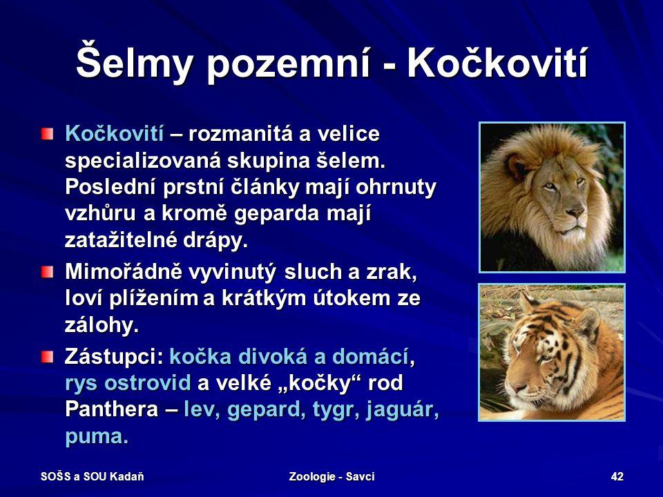 SOŠS a SOU Kadaň Zoologie - Savci 42 Šelmy pozemní - Kočkovití Kočkovití – rozmanitá a velice specializovaná skupina šelem. Poslední prstní články maj