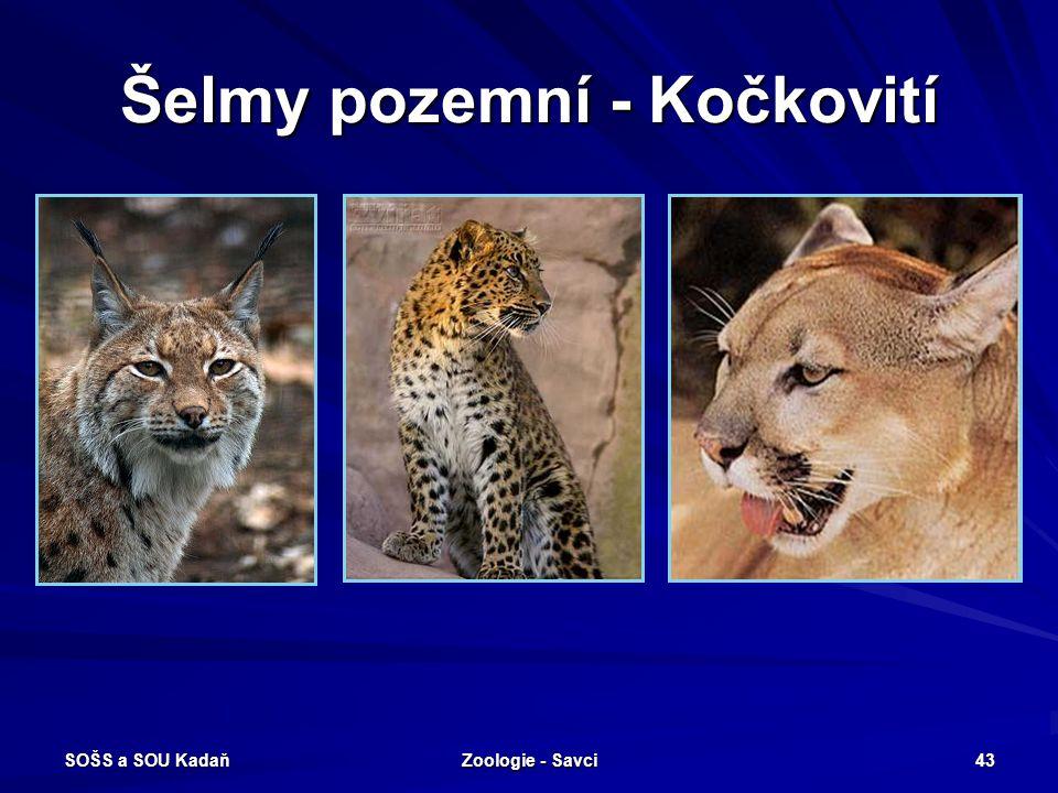SOŠS a SOU Kadaň Zoologie - Savci 43 Šelmy pozemní - Kočkovití