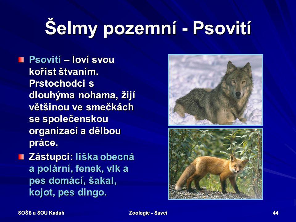 SOŠS a SOU Kadaň Zoologie - Savci 44 Šelmy pozemní - Psovití Psovití – loví svou kořist štvaním. Prstochodci s dlouhýma nohama, žijí většinou ve smečk