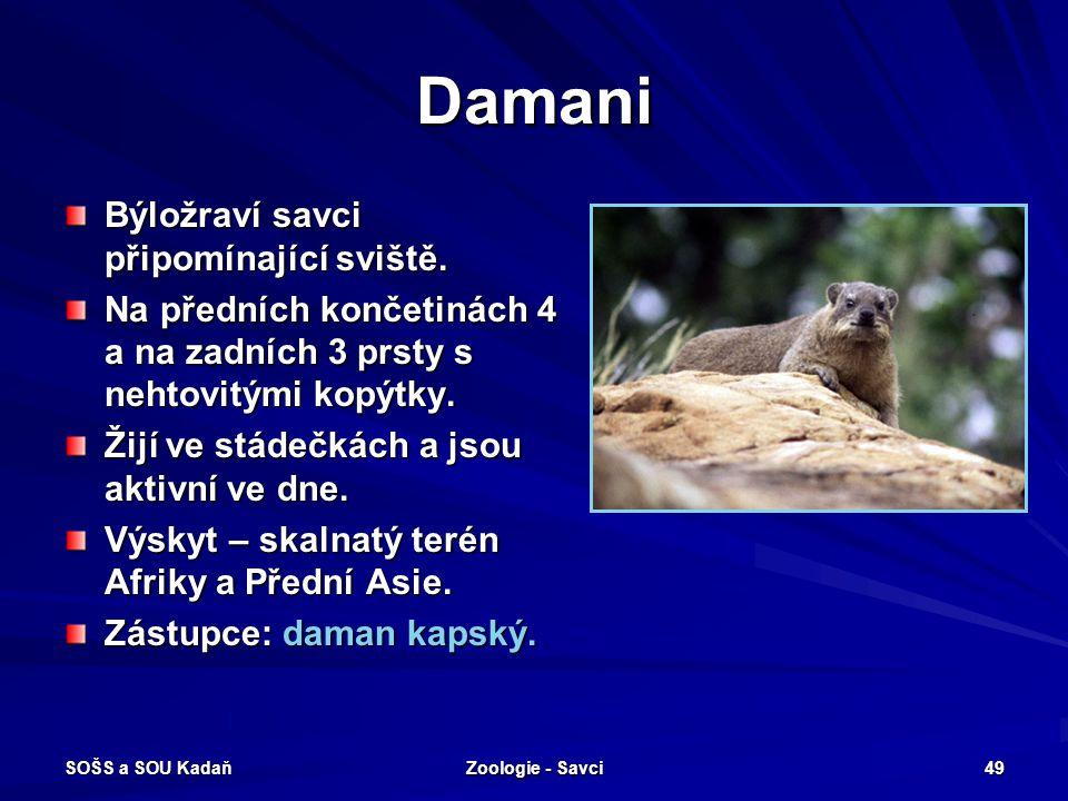SOŠS a SOU Kadaň Zoologie - Savci 49 Damani Býložraví savci připomínající sviště. Na předních končetinách 4 a na zadních 3 prsty s nehtovitými kopýtky