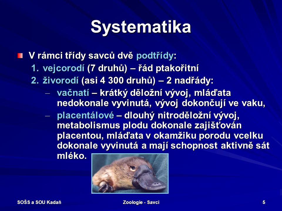 SOŠS a SOU Kadaň Zoologie - Savci 5 Systematika V rámci třídy savců dvě podtřídy: 1.vejcorodí (7 druhů) – řád ptakořitní 2.živorodí (asi 4 300 druhů)