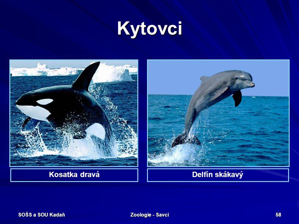 SOŠS a SOU Kadaň Zoologie - Savci 58 Kytovci Kosatka draváDelfín skákavý