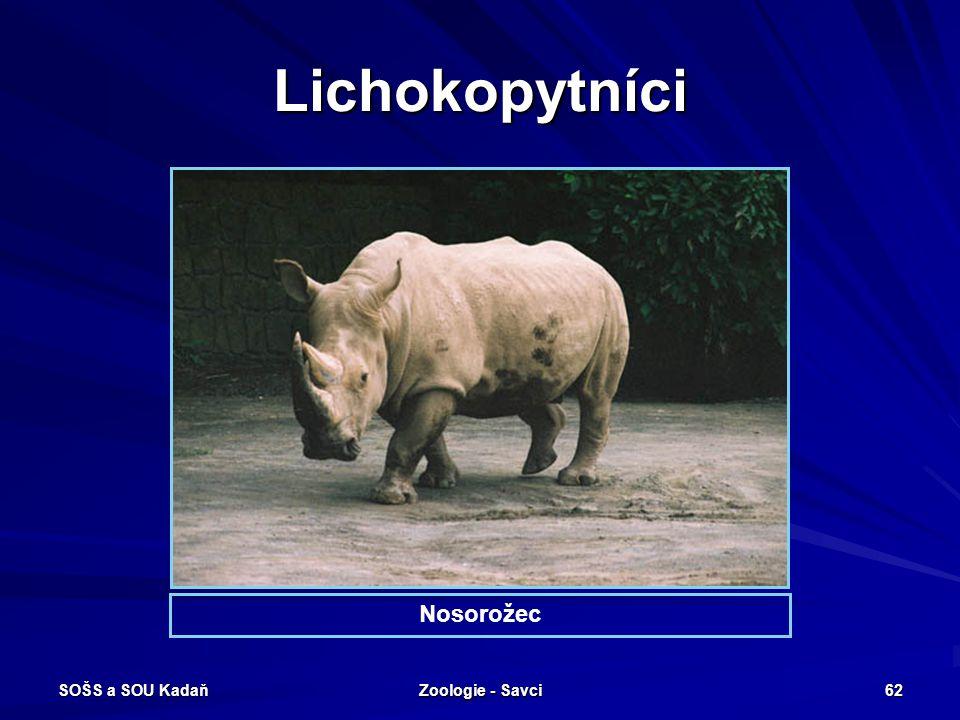 SOŠS a SOU Kadaň Zoologie - Savci 62 Lichokopytníci Nosorožec