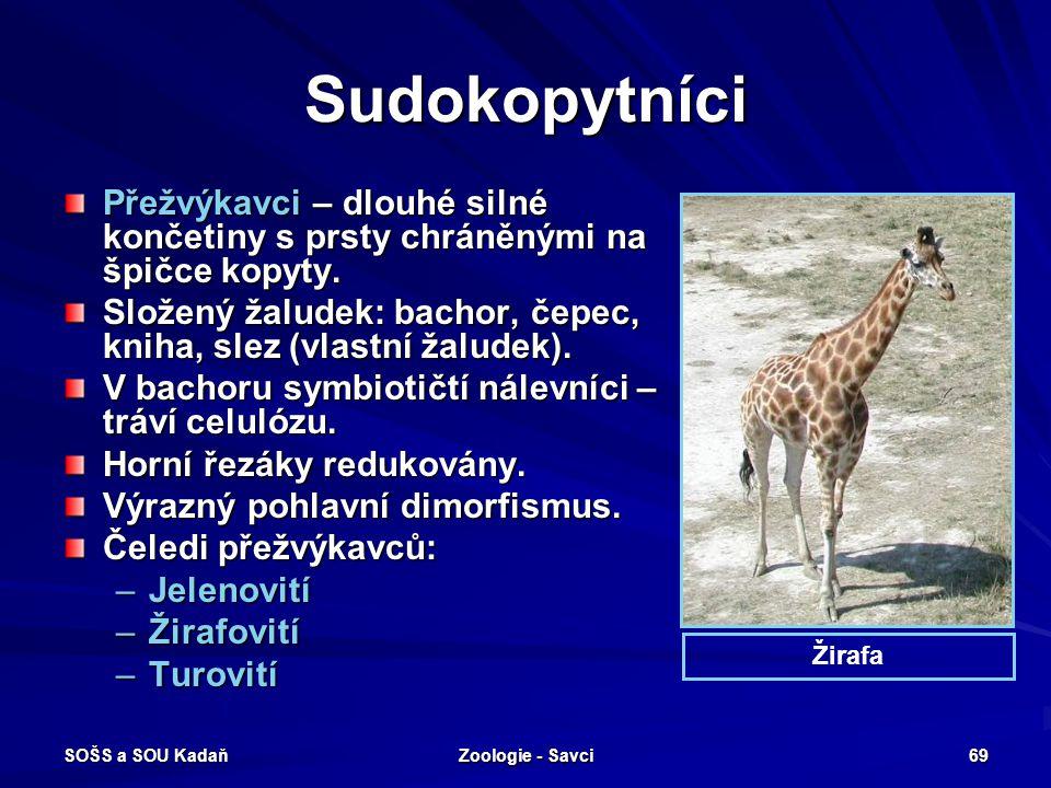 SOŠS a SOU Kadaň Zoologie - Savci 69 Sudokopytníci Přežvýkavci – dlouhé silné končetiny s prsty chráněnými na špičce kopyty. Složený žaludek: bachor,