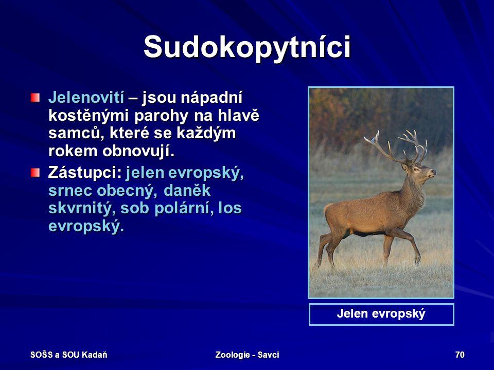 SOŠS a SOU Kadaň Zoologie - Savci 70 Sudokopytníci Jelenovití – jsou nápadní kostěnými parohy na hlavě samců, které se každým rokem obnovují. Zástupci