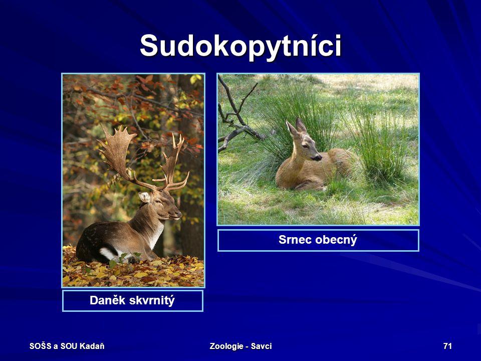SOŠS a SOU Kadaň Zoologie - Savci 71 Sudokopytníci Srnec obecný Daněk skvrnitý