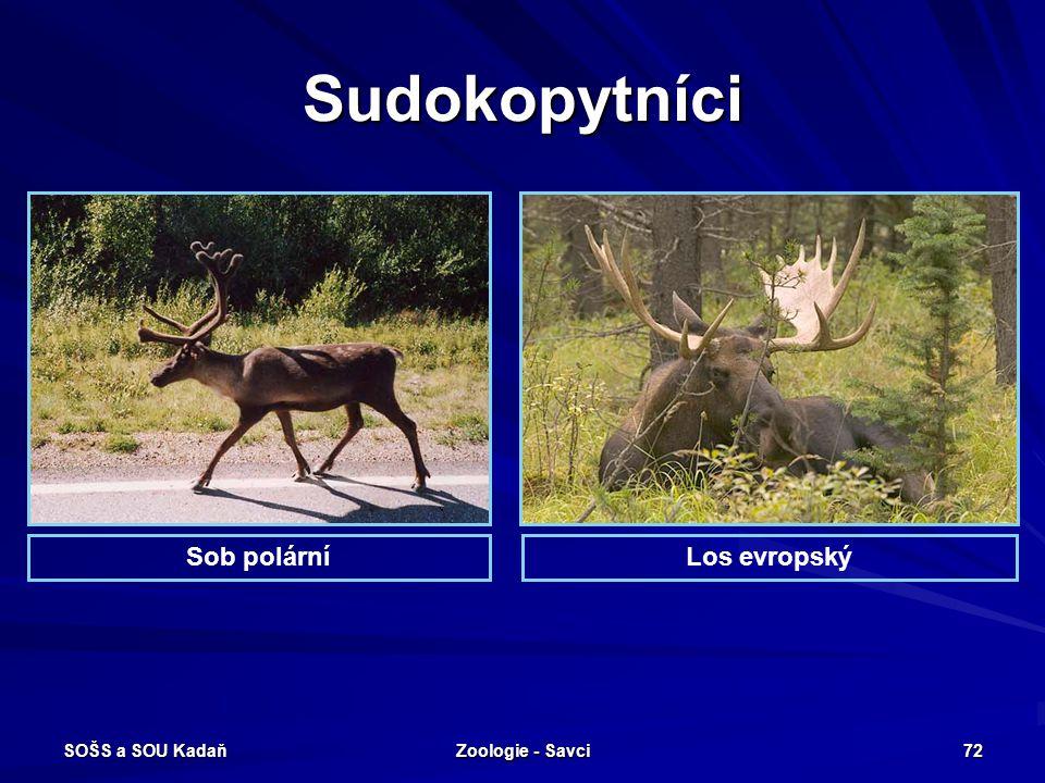 SOŠS a SOU Kadaň Zoologie - Savci 72 Sudokopytníci Los evropskýSob polární