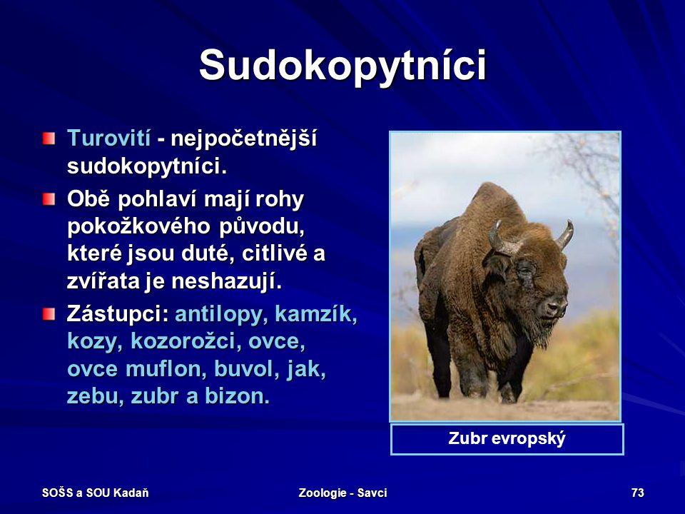 SOŠS a SOU Kadaň Zoologie - Savci 73 Sudokopytníci Turovití - nejpočetnější sudokopytníci. Obě pohlaví mají rohy pokožkového původu, které jsou duté,
