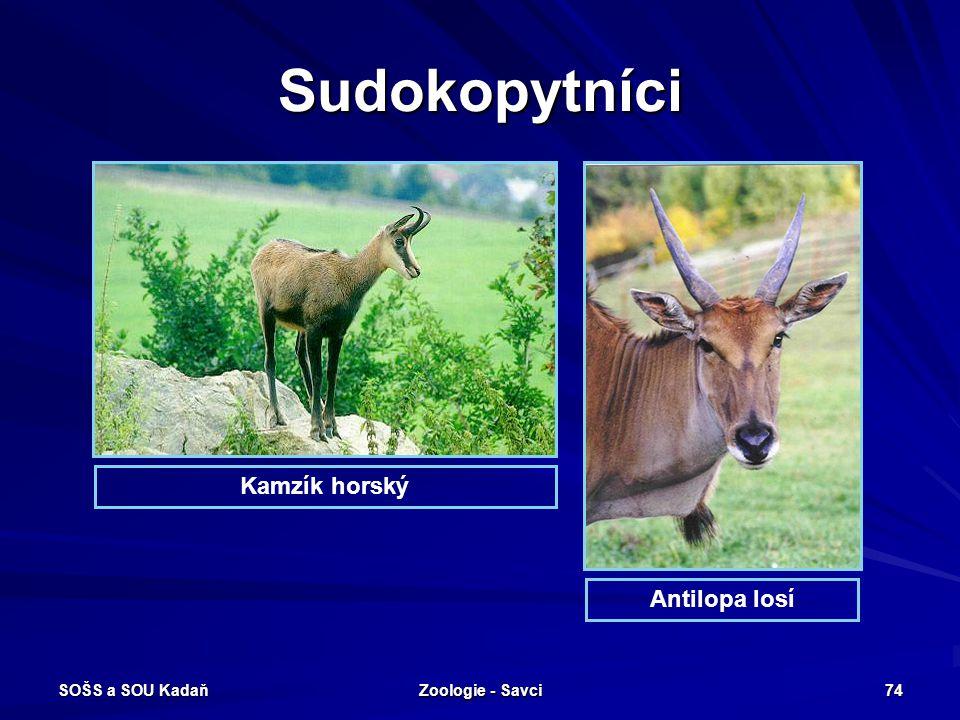 SOŠS a SOU Kadaň Zoologie - Savci 74 Sudokopytníci Kamzík horský Antilopa losí