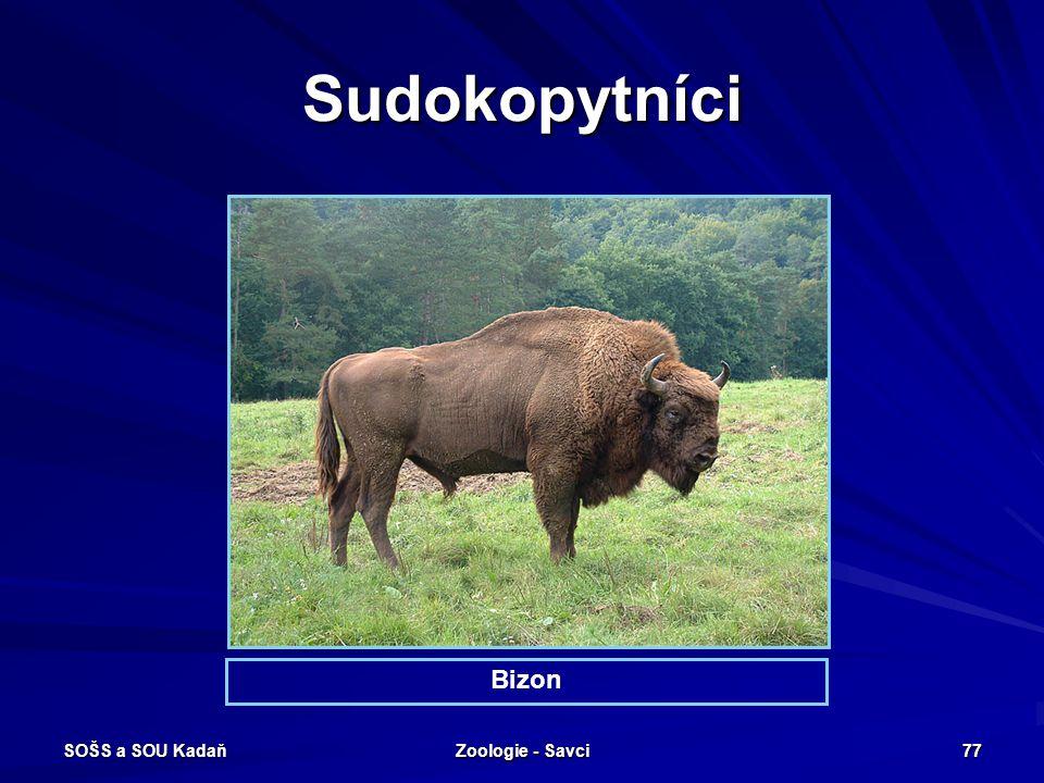 SOŠS a SOU Kadaň Zoologie - Savci 77 Sudokopytníci Bizon