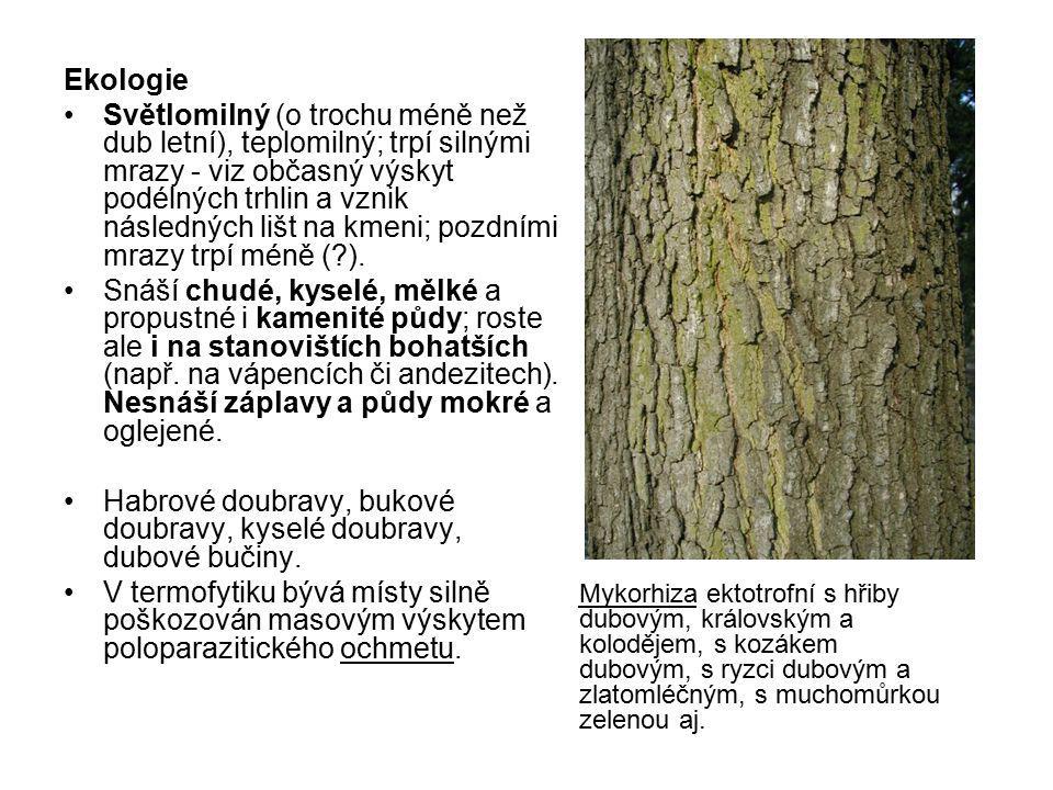 Ekologie Světlomilný (o trochu méně než dub letní), teplomilný; trpí silnými mrazy - viz občasný výskyt podélných trhlin a vznik následných lišt na km