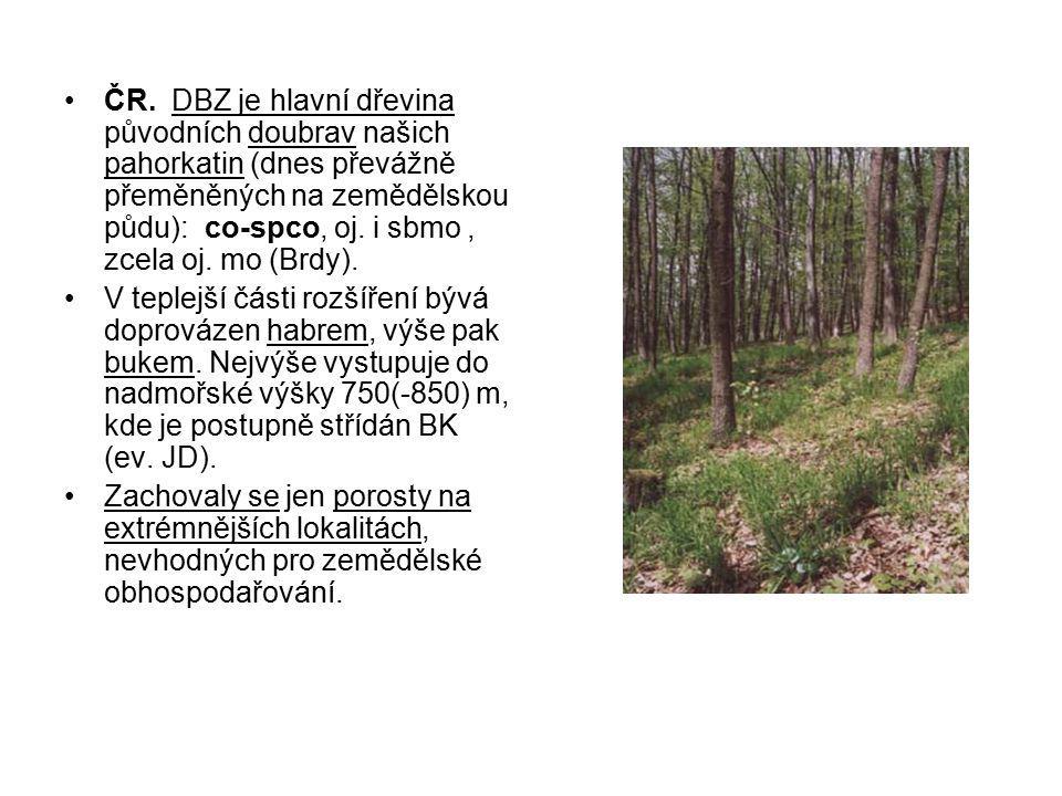ČR. DBZ je hlavní dřevina původních doubrav našich pahorkatin (dnes převážně přeměněných na zemědělskou půdu): co-spco, oj. i sbmo, zcela oj. mo (Brdy