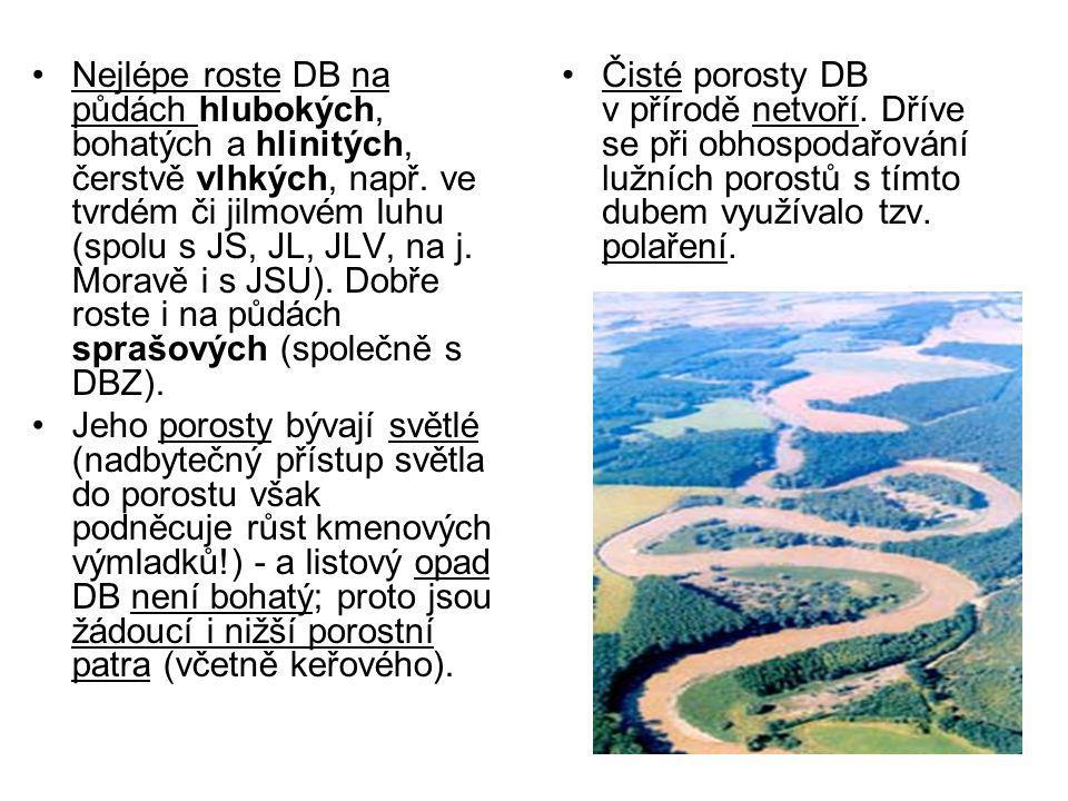 Nejlépe roste DB na půdách hlubokých, bohatých a hlinitých, čerstvě vlhkých, např. ve tvrdém či jilmovém luhu (spolu s JS, JL, JLV, na j. Moravě i s J
