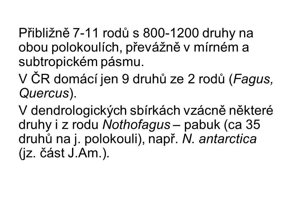 Přibližně 7-11 rodů s 800-1200 druhy na obou polokoulích, převážně v mírném a subtropickém pásmu. V ČR domácí jen 9 druhů ze 2 rodů (Fagus, Quercus).
