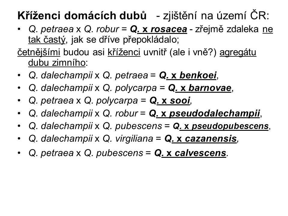 Kříženci domácích dubů - zjištění na území ČR: Q. petraea x Q. robur = Q. x rosacea - zřejmě zdaleka ne tak častý, jak se dříve přepokládalo; četnější