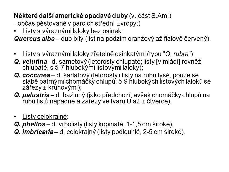 Některé další americké opadavé duby (v. část S.Am.) - občas pěstované v parcích střední Evropy:) Listy s výraznými laloky bez osinek: Quercus alba – d