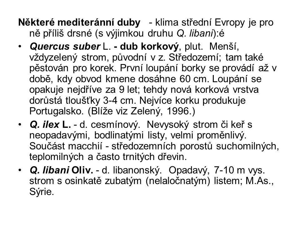 Některé mediteránní duby - klima střední Evropy je pro ně příliš drsné (s výjimkou druhu Q. libani):é Quercus suber L. - dub korkový, plut. Menší, vžd