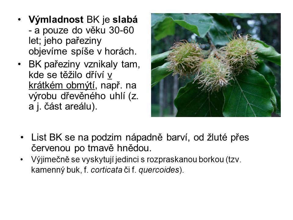 Castanea Mill.- kaštanovník Opadavé stromy n.