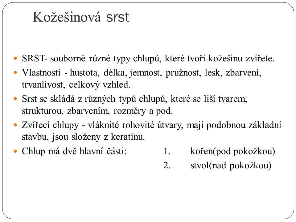 Vývoj kořene a růst zvířecího chlupu 1.Zárodek chlupu, 2.tvorba papily, 3.vznik chlupového kužele, 4.rostoucí( papilový ) chlup.