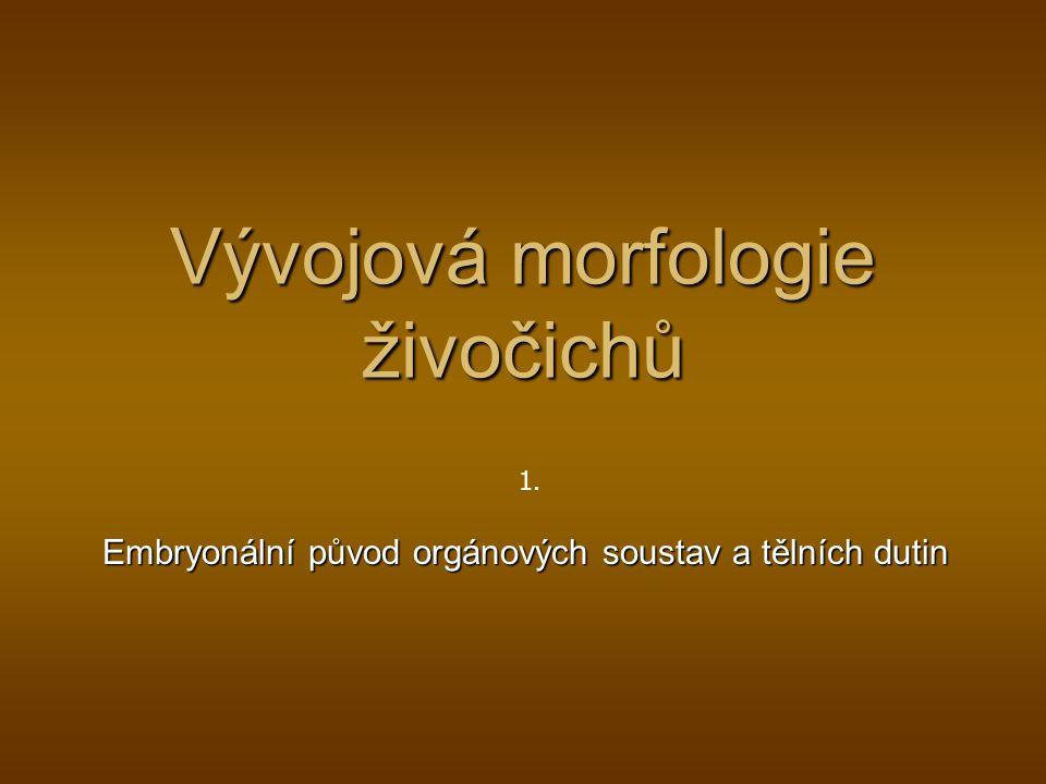 Vývojová morfologie živočichů Embryonální původ orgánových soustav a tělních dutin 1.