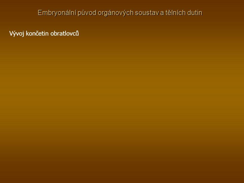 Embryonální původ orgánových soustav a tělních dutin Vývoj končetin obratlovců