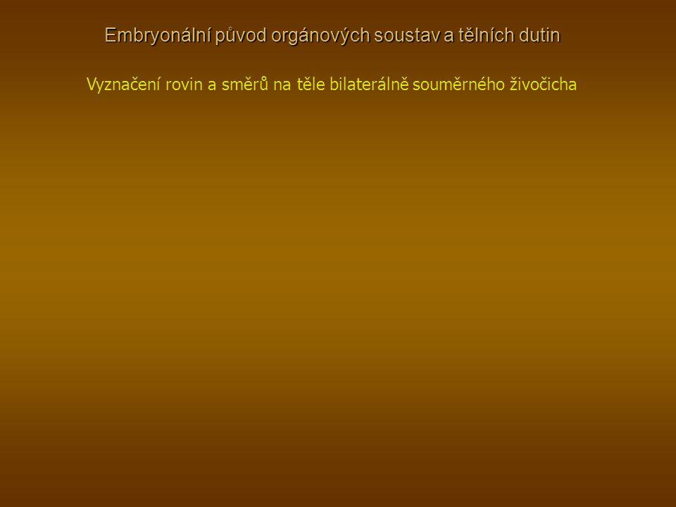 Embryonální původ orgánových soustav a tělních dutin Vyznačení rovin a směrů na těle bilaterálně souměrného živočicha