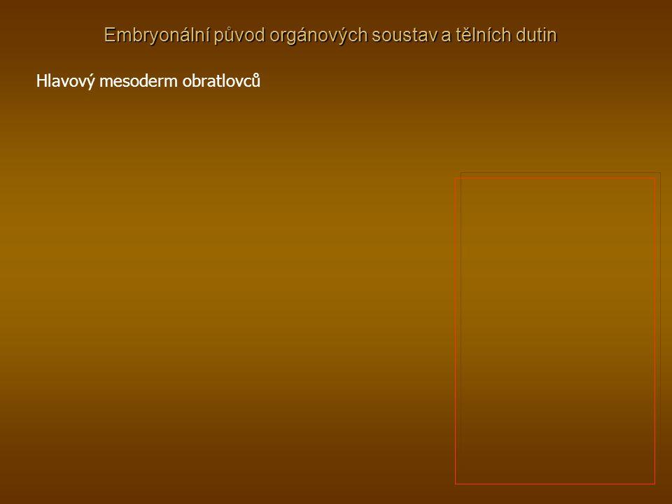 Embryonální původ orgánových soustav a tělních dutin Hlavový mesoderm obratlovců