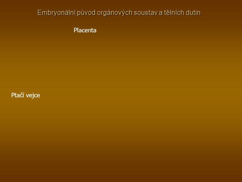 Embryonální původ orgánových soustav a tělních dutin Placenta Ptačí vejce