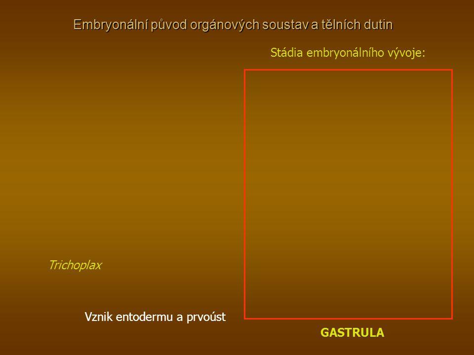 Embryonální původ orgánových soustav a tělních dutin Trichoplax Stádia embryonálního vývoje: GASTRULA Vznik entodermu a prvoúst