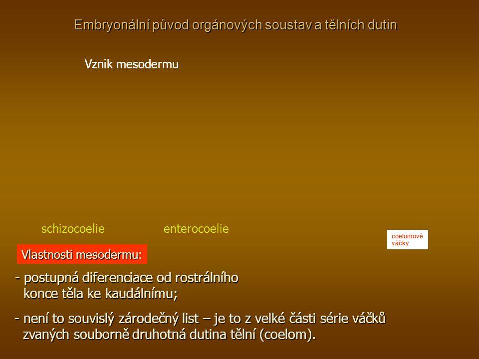 Embryonální původ orgánových soustav a tělních dutin Vznik mesodermu schizocoelie enterocoelie coelomové váčky Vlastnosti mesodermu Vlastnosti mesoder