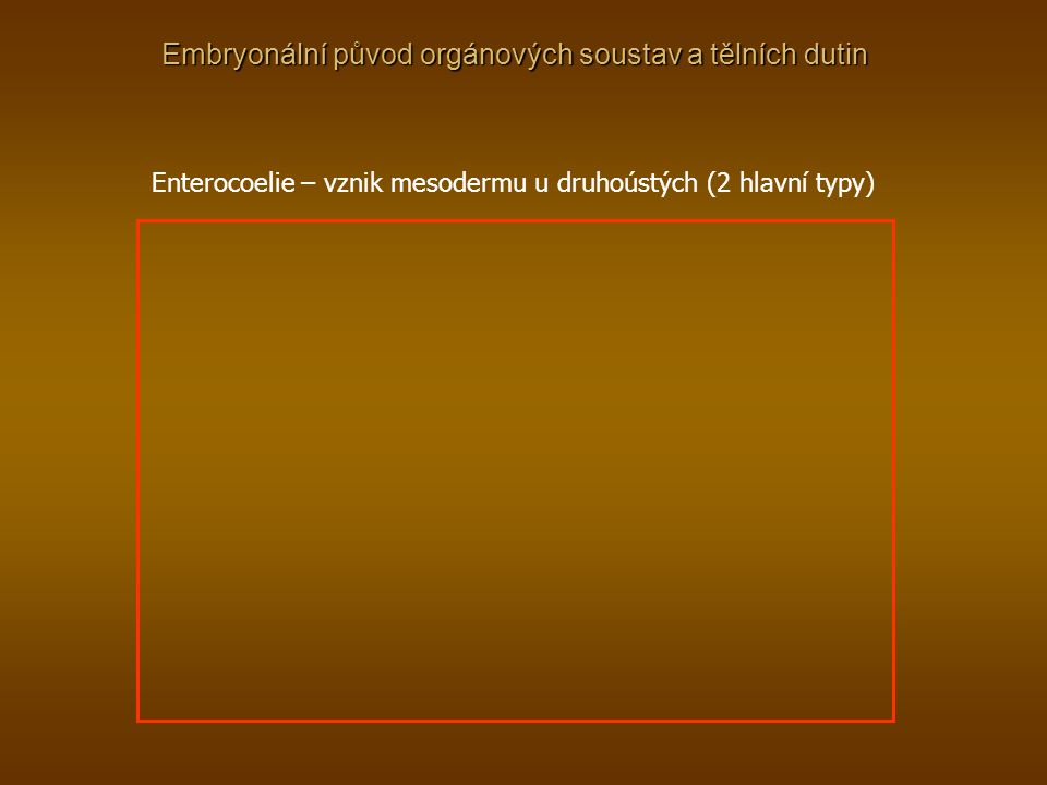 Embryonální původ orgánových soustav a tělních dutin Enterocoelie – vznik mesodermu u druhoústých (2 hlavní typy)