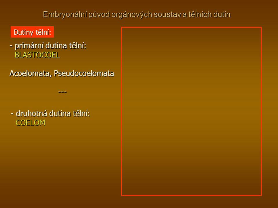 Embryonální původ orgánových soustav a tělních dutin Dutiny tělní Dutiny tělní: - primární dutina tělní: BLASTOCOEL BLASTOCOEL Acoelomata, Pseudocoelo