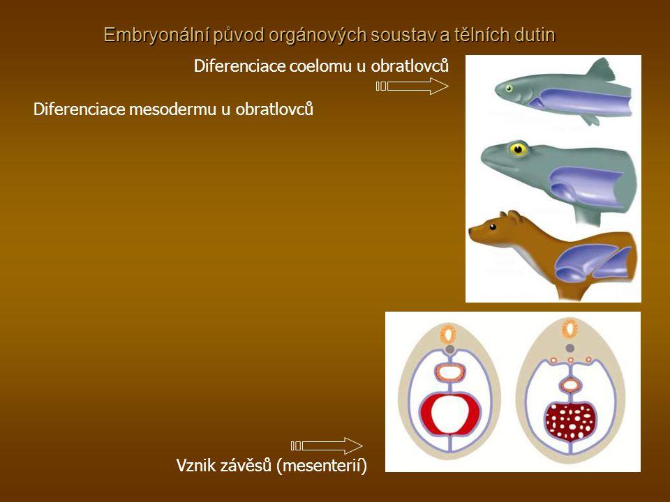Embryonální původ orgánových soustav a tělních dutin Diferenciace mesodermu u obratlovců Diferenciace coelomu u obratlovců Vznik závěsů (mesenterií)