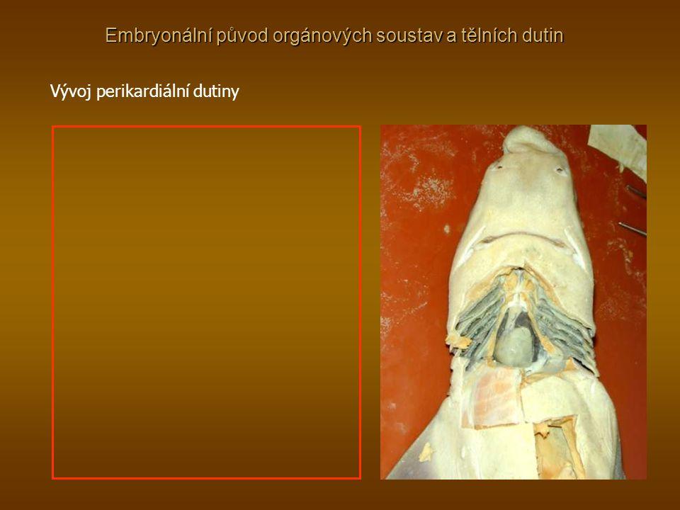 Embryonální původ orgánových soustav a tělních dutin Vývoj perikardiální dutiny
