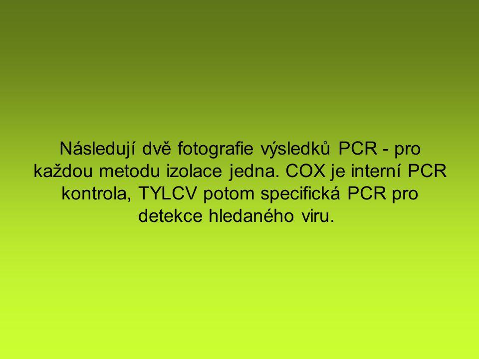 Následují dvě fotografie výsledků PCR - pro každou metodu izolace jedna.