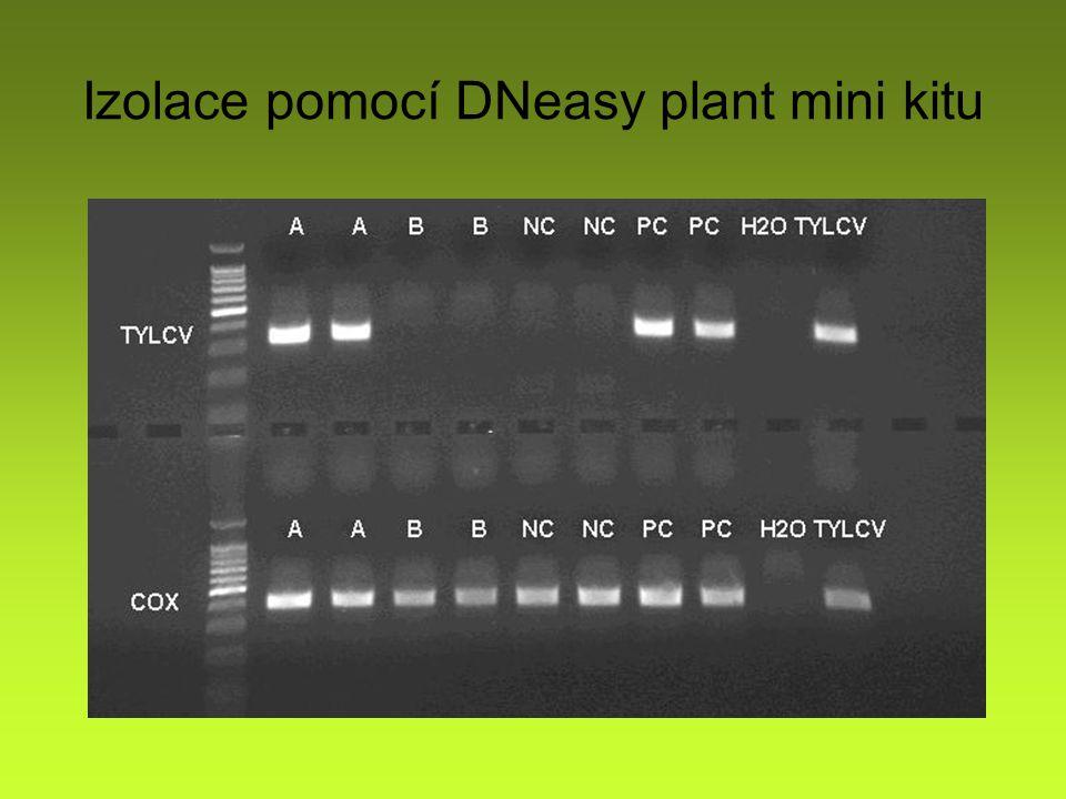 Izolace pomocí DNeasy plant mini kitu