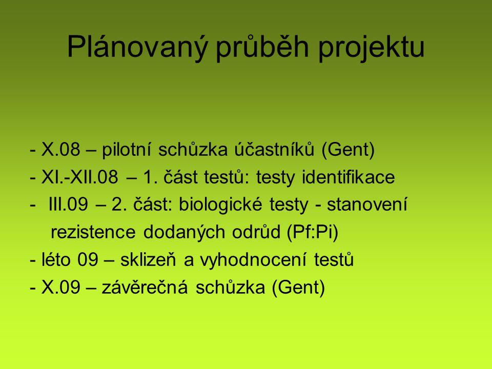 Plánovaný průběh projektu - X.08 – pilotní schůzka účastníků (Gent) - XI.-XII.08 – 1.