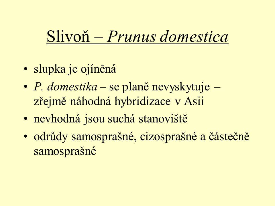 Slivoň – Prunus domestica slupka je ojíněná P. domestika – se planě nevyskytuje – zřejmě náhodná hybridizace v Asii nevhodná jsou suchá stanoviště odr
