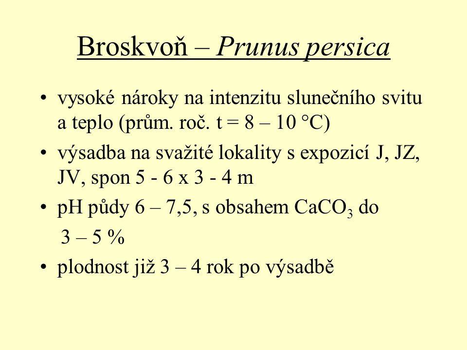 Broskvoň – Prunus persica vysoké nároky na intenzitu slunečního svitu a teplo (prům. roč. t = 8 – 10 °C) výsadba na svažité lokality s expozicí J, JZ,