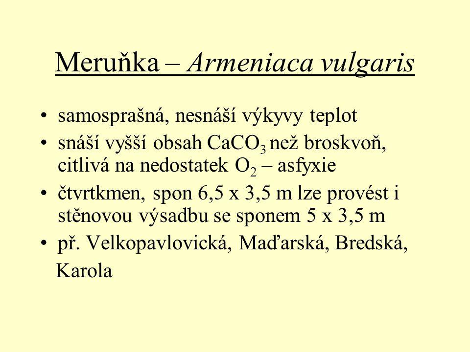 Meruňka – Armeniaca vulgaris samosprašná, nesnáší výkyvy teplot snáší vyšší obsah CaCO 3 než broskvoň, citlivá na nedostatek O 2 – asfyxie čtvrtkmen,