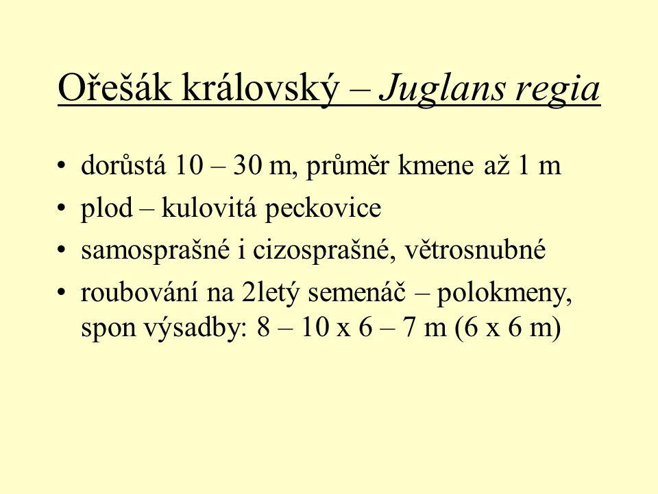 Ořešák královský – Juglans regia dorůstá 10 – 30 m, průměr kmene až 1 m plod – kulovitá peckovice samosprašné i cizosprašné, větrosnubné roubování na