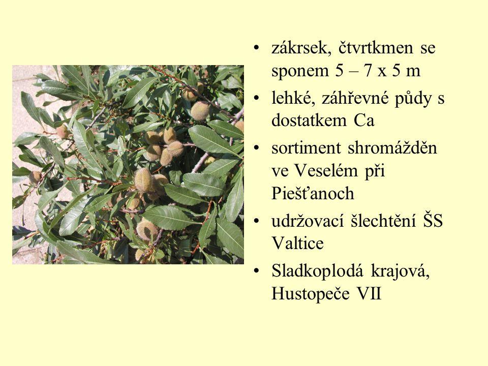 zákrsek, čtvrtkmen se sponem 5 – 7 x 5 m lehké, záhřevné půdy s dostatkem Ca sortiment shromážděn ve Veselém při Piešťanoch udržovací šlechtění ŠS Val