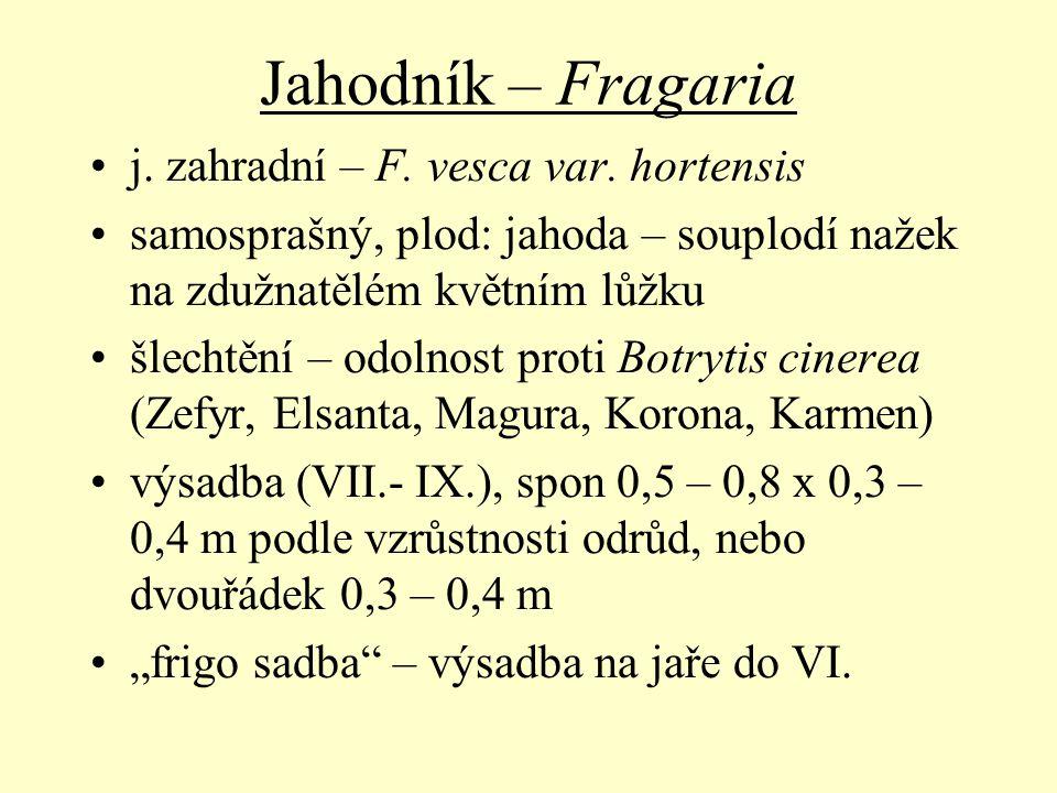 Jahodník – Fragaria j. zahradní – F. vesca var. hortensis samosprašný, plod: jahoda – souplodí nažek na zdužnatělém květním lůžku šlechtění – odolnost