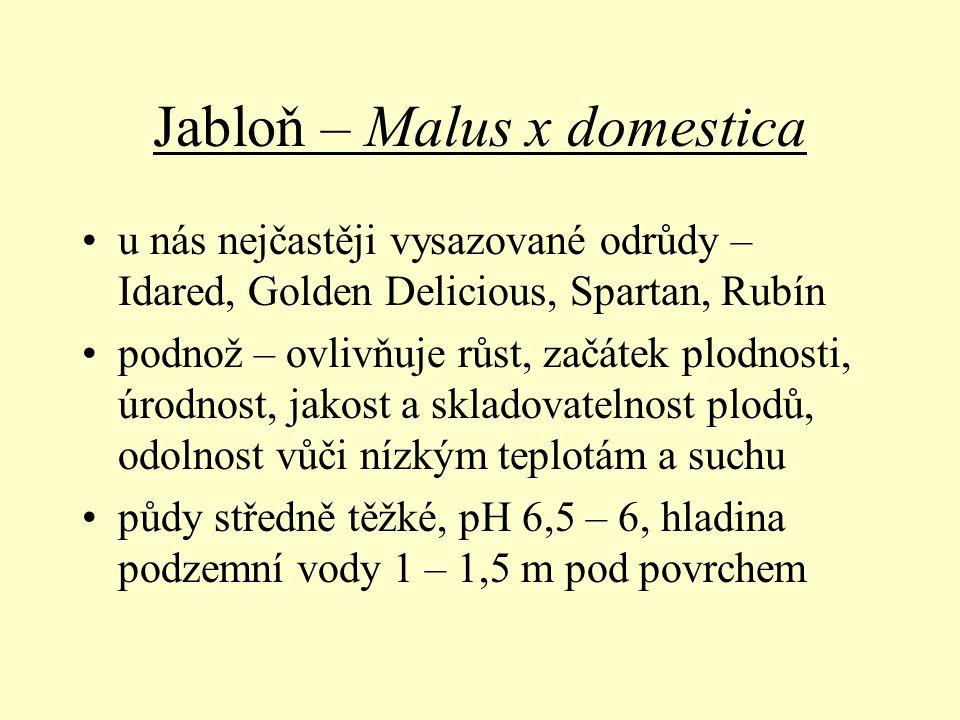 Jabloň – Malus x domestica u nás nejčastěji vysazované odrůdy – Idared, Golden Delicious, Spartan, Rubín podnož – ovlivňuje růst, začátek plodnosti, ú