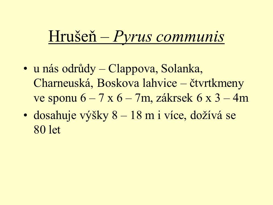 Hrušeň – Pyrus communis u nás odrůdy – Clappova, Solanka, Charneuská, Boskova lahvice – čtvrtkmeny ve sponu 6 – 7 x 6 – 7m, zákrsek 6 x 3 – 4m dosahuj