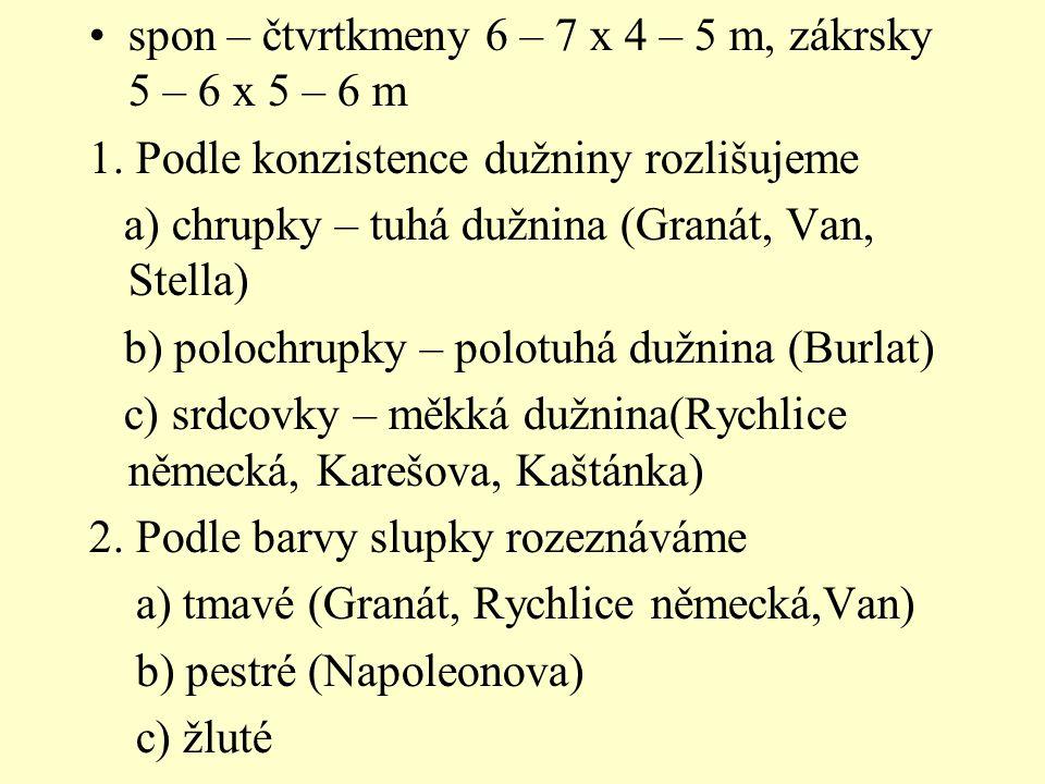spon – čtvrtkmeny 6 – 7 x 4 – 5 m, zákrsky 5 – 6 x 5 – 6 m 1. Podle konzistence dužniny rozlišujeme a) chrupky – tuhá dužnina (Granát, Van, Stella) b)