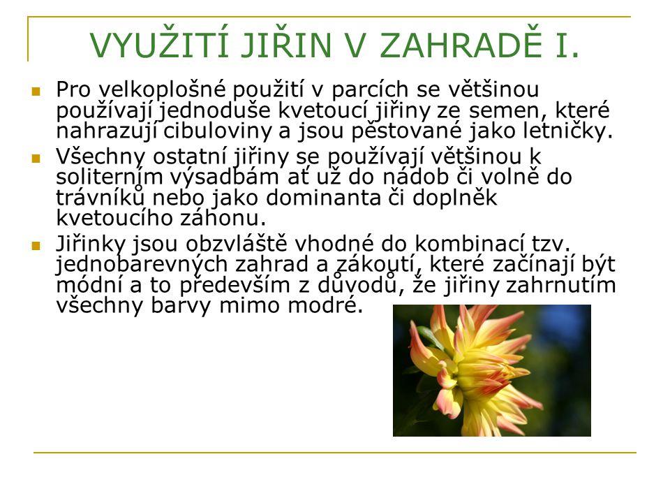 VYUŽITÍ JIŘIN V ZAHRADĚ I. Pro velkoplošné použití v parcích se většinou používají jednoduše kvetoucí jiřiny ze semen, které nahrazují cibuloviny a js
