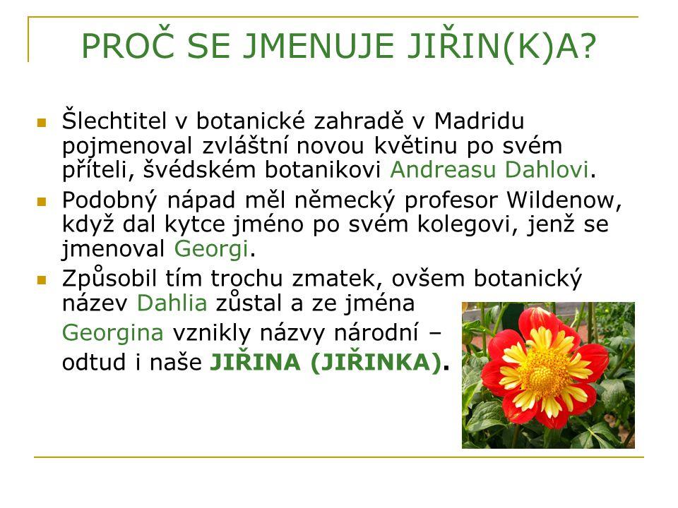 PROČ SE JMENUJE JIŘIN(K)A? Šlechtitel v botanické zahradě v Madridu pojmenoval zvláštní novou květinu po svém příteli, švédském botanikovi Andreasu Da