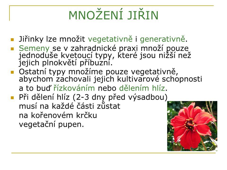 MNOŽENÍ JIŘIN Jiřinky lze množit vegetativně i generativně. Semeny se v zahradnické praxi množí pouze jednoduše kvetoucí typy, které jsou nižší než je